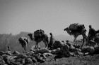 [socotra-the-island-of-djinns--Film-image]